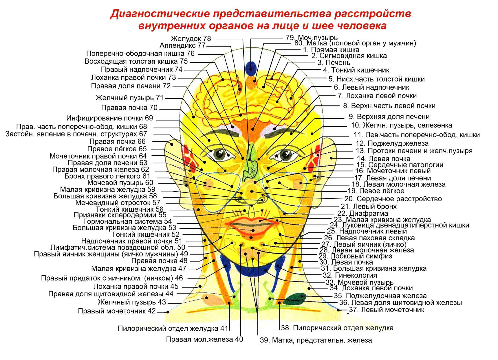 Схема взаимосвязь органов и систем органов фото 67
